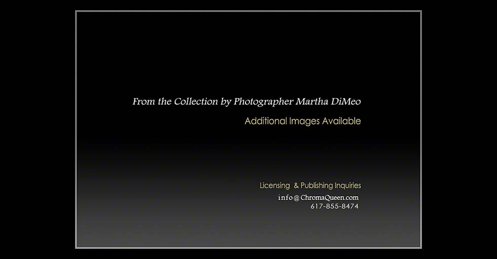 From the Ballet Photography Collection by Martha DiMeo:Licensing Title Slide