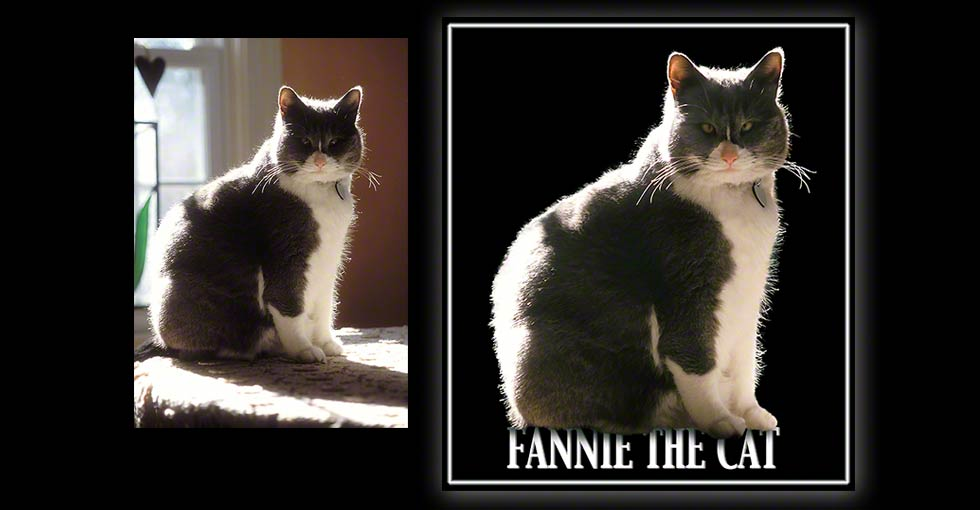 Cat on black background, photo silo example Before & After