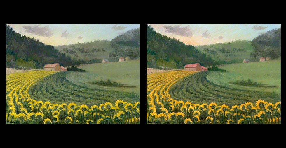 Before & After Sunflower Flower Oil Painting by Melody Phaneuf